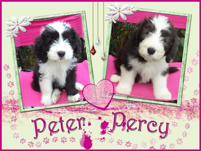 Peter und Percy sind noch auf der Suche nach ihrer Familie.