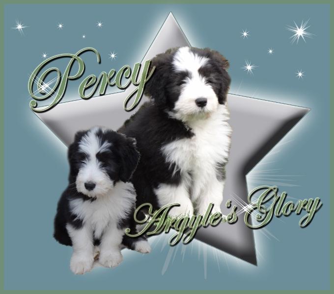 Der kleine Percy ist noch auf der Suche nach seiner Familie!